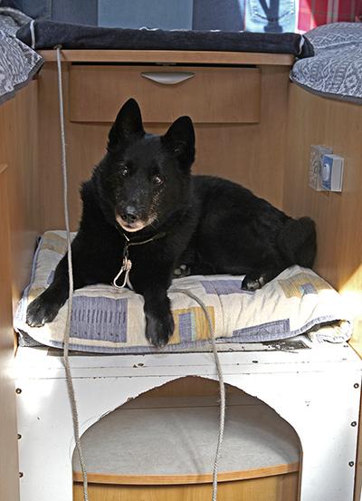 Hunden Tim, tolv år, på plats ovanpå sin koja mellan parets bäddar.